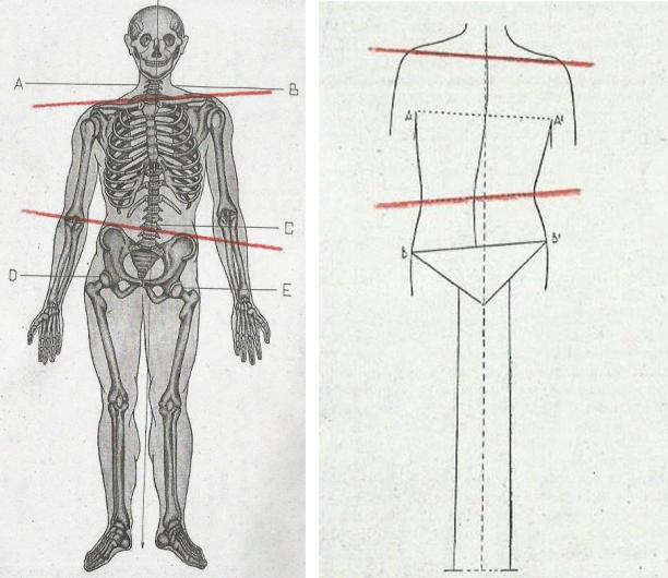 Afb. 4 Modellen die scheefstand tonen. Links de voorkant en rechts de achterkant van het lichaam.